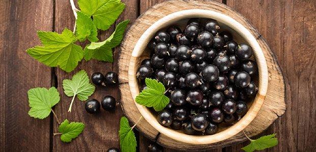 Черная смородина – состав, польза и народные рецепты
