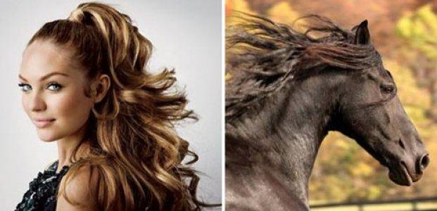 Шампунь для лошадей: вред или польза для человека?