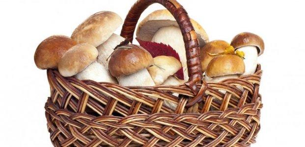 Грибы — польза и полезные свойства грибов. Возможный вред