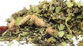 Почечный чай — польза, вред и противопоказания