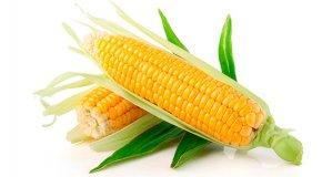 Кукуруза – состав, полезные свойства и противопоказания
