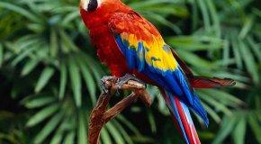 Почему у попугая выпадают перья