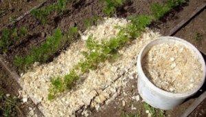Опилки для огорода – польза и вред