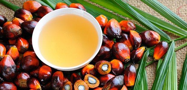 Пальмовое масло – польза, вред и почему его считают опасным