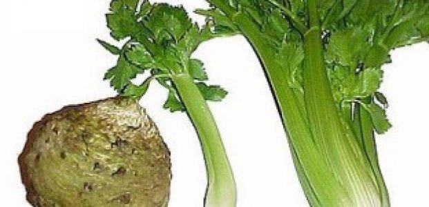 Сельдерей – рецепты для похудения