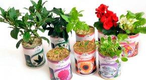 Когда сажать цветы — астры, крокусы, георгины, гладиолусы