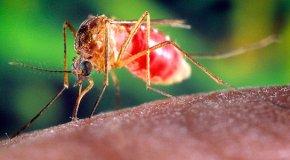Народные средства от комаров – борьба в домашних условиях