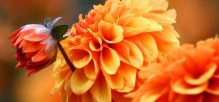 Какие цветы можно посадить осенью на даче