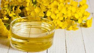 Рапсовое масло – состав, польза и вред