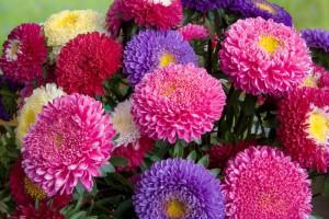 Многолетние цветы осенью