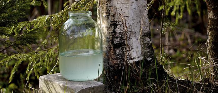 Как сделать березовый сок