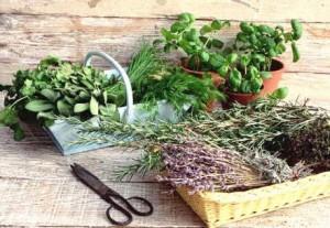 Травы от бессонницы рецепты народной медицины для мужчин и женщин