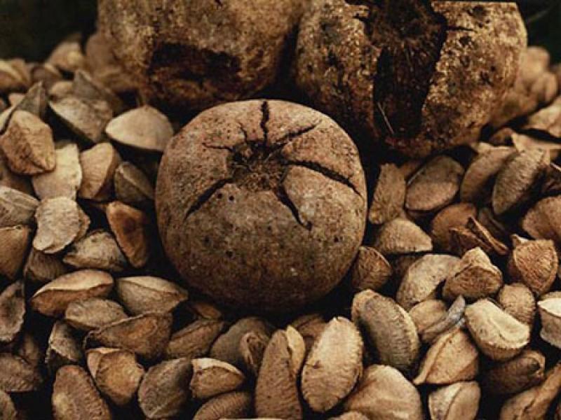 фото бразильские орехи