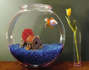 аквариум для привлечения денег