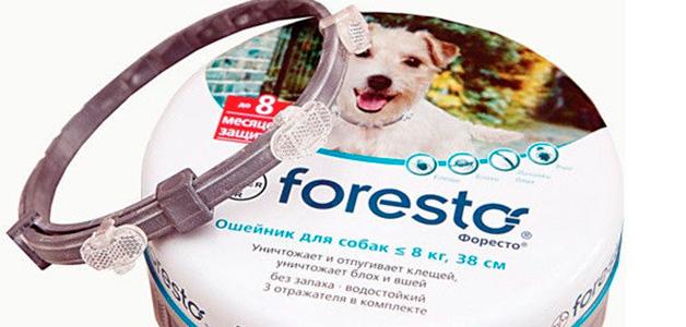 Прививка от энцефалита для собак
