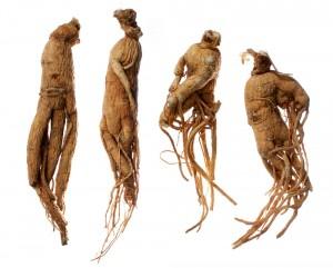 свойства корня женьшеня