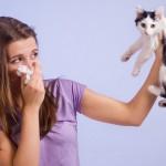 Гипоаллергенные животные – какие питомцы подойдут аллергетику