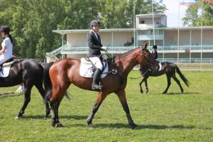 Лошади иппотерапия