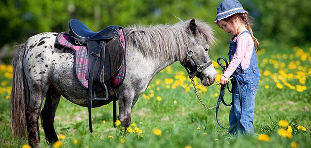 Иппотерапия - как проходит лечение лошадьми