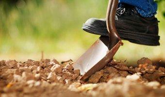 К чему снится копать картошку – разбор сновидения по элементам
