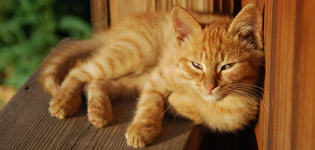 Рыжий кот во сне