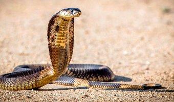 К чему снится убитая змея – толкование сна
