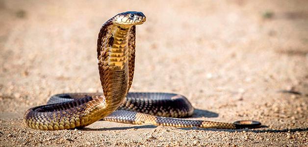 Приснились змеи к чему это сонник беременной