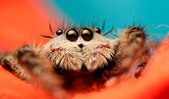 К чему снятся пауки: предсказания сонников