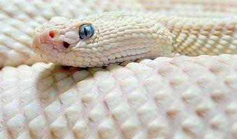 К чему снятся змеи – разбор сна по разным сонникам