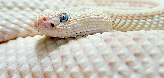 Сонник змея к чему снится змея во сне