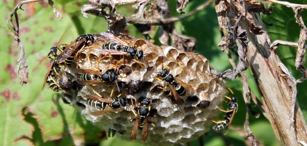 убрать осиное гнездо на даче