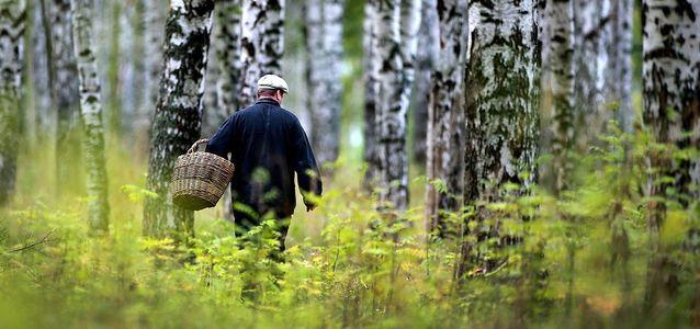если потерялся в лесу