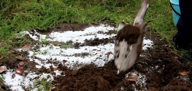 Как раскислить почву на огороде мелом