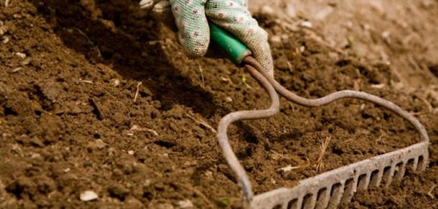Как раскислить почву весной