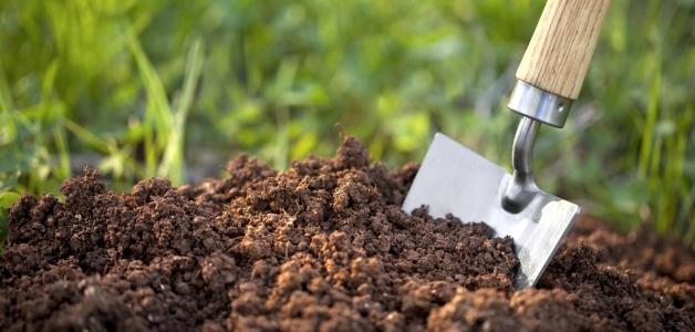 Как раскислить почву перед посадкой