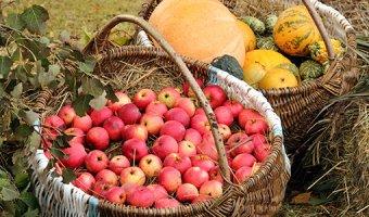 Какие витамины нужно пить осенью – укрепляем здоровье