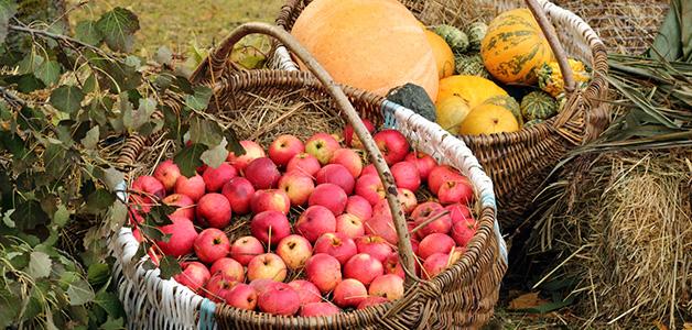 Какие витамины нужно пить осенью - укрепляем здоровье