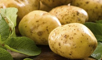 Картофельная моль – как бороться и чем опасна