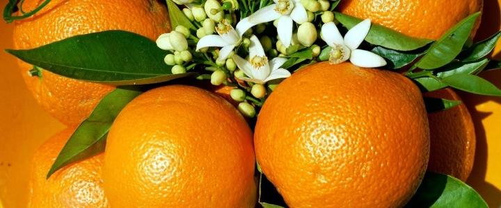 выбрать апельсины