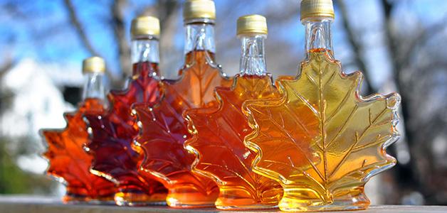 Кленовый сок - польза и вред кленового сока