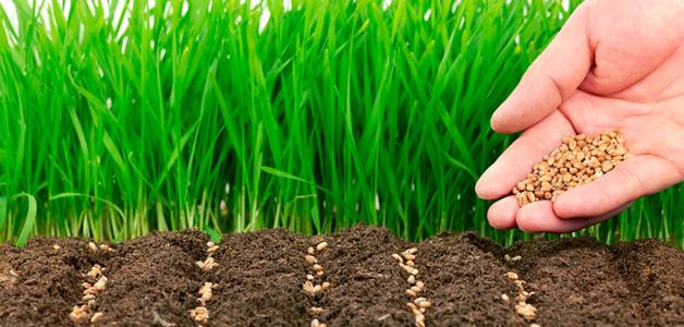 Когда и как нужно сеять сидераты?