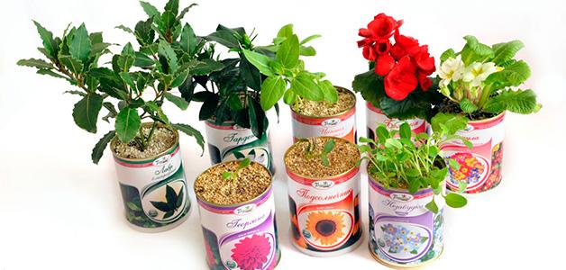 Когда сажать цветы - астры, крокусы, георгины, гладиолусы