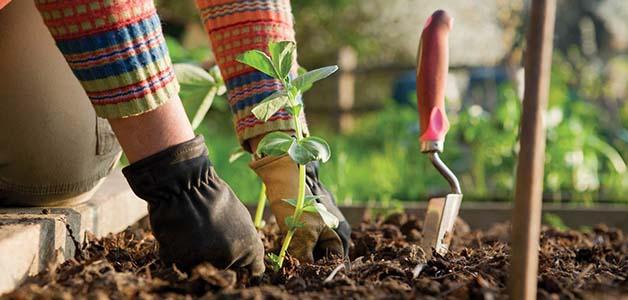 Когда посадить рассаду в 2019 году