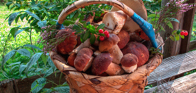 Консервация грибов