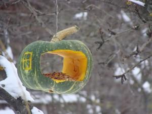 Кормушки для птиц оригинальные идеи
