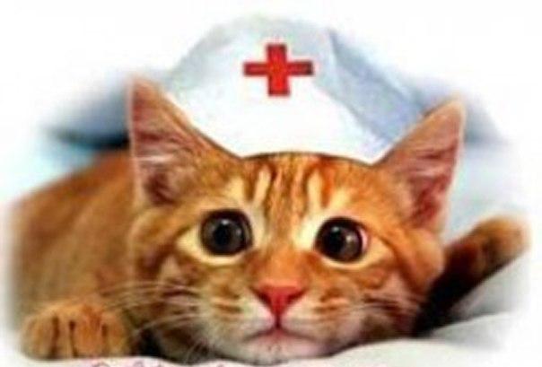 Чем коты помогают людям