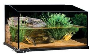 обустройство аквариума для черепахи