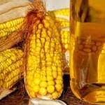 Кукурузное масло – польза и полезные свойства