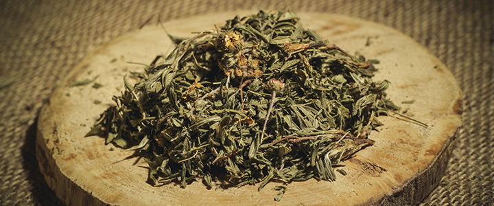 Польза курильского чая