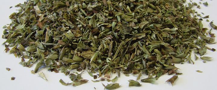 Лечебные свойства курильского чая